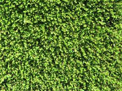 plants_bushmans_confetti