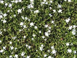 plants_summersnow