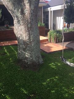 Dioica under tree (2)